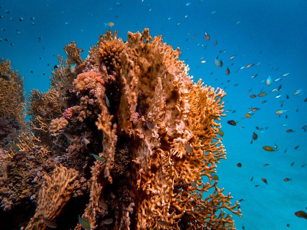 corallo-indonesia